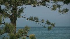 Pine tree and beach - stock footage