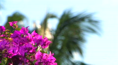 Flowers Rack Focus to Palm Tree Stock Footage