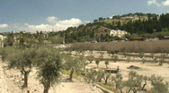 Jerusalem Gethsemane pan 3 Stock Footage