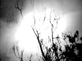 Stock Video Footage of Old footage- Panning past forest looking tree