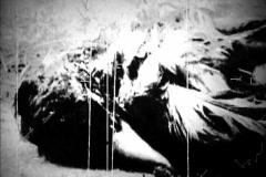 Old Footage- Dead Bird II - stock footage