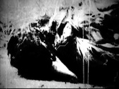 Stock Video Footage of Old Footage- Dead Bird II