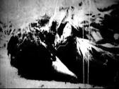 Old Footage- Dead Bird II Stock Footage