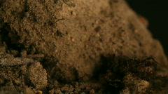 Ants Vs Beatle Timelapse Stock Footage