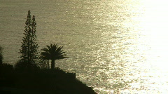 Trees in front of the sparkling ocean. - stock footage
