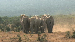 Group Elephants - stock footage