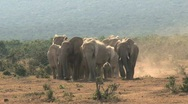 Group Elephants Stock Footage