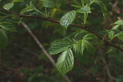 Wet leaf rocking on the breeze Stock Footage