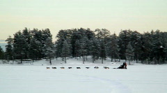 Dog sledge Sweden - stock footage