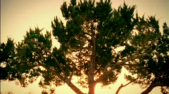 Golden / Passing Tree 35mm / HD - stock footage