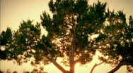 Stock Video Footage of Golden / Passing Tree 35mm / HD
