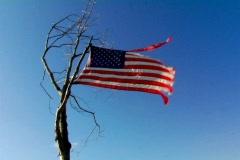 Worn US Flag on a Tree - stock footage
