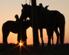 Two Mongolian horses and nomad at sunrise Stock Footage