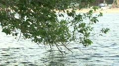 Hillsborough River & Tree Stock Footage