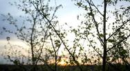 Leaves at dusk Stock Footage