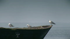 Seagulls on the fishing boat Stock Footage