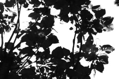 B&W Leaves - stock footage