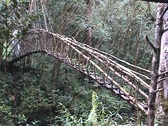Bridge in jungle Stock Footage