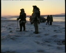 Reindeers in tundra - stock footage