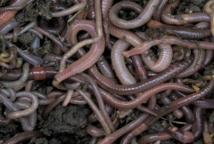 Worms 1 Stock Footage
