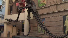 Dinosaur Skeleton Stock Footage