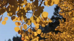 scenic fall 906 1 - stock footage