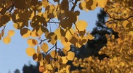 Scenic fall 906 1 Stock Footage