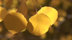 Scenic fall 906 3 Stock Footage