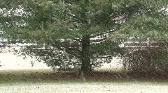 Light snowy day Stock Footage