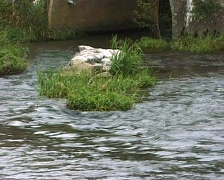 River going under a bridge Stock Footage