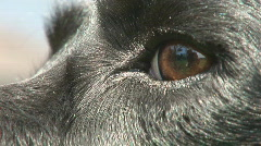 Close up of dog Stock Footage
