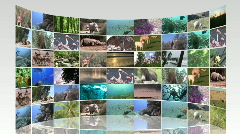 Montage of wildlife footage Stock Footage