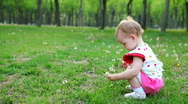 Little girl picking dandelion Stock Footage