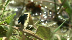 Blue Dragonfly Stock Footage