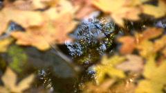 Rack focus Autumn leaves on water - stock footage