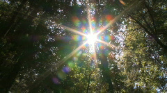 Sunlight in the forest Stock Footage