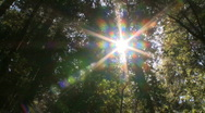 Stock Video Footage of Sunlight in the forest