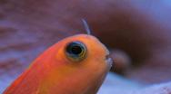 Stock Video Footage of Fish Macro SD NTSC