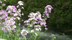 Flowers with Stream in the Background Stock Footage