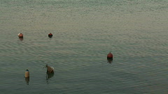 harbour buoys - stock footage