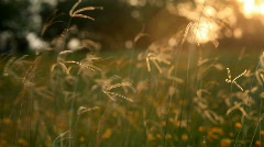 Stock Video Footage of sunset grass field