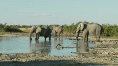 Elephants at a waterhole Stock Footage