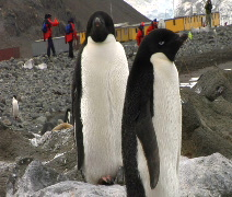 Penguins near Research Station in Antarctic Stock Footage