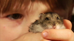 Little hamster Stock Footage