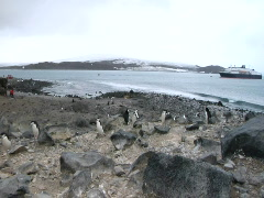 Penguins & Ship Antarctica Stock Footage