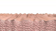 Stock Video Footage of Skin wrinkling wide