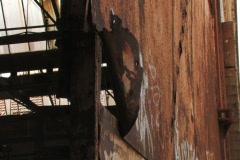 Rusty Swining Door NTSC Stock Footage