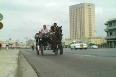 Horse buggy bike in havana Stock Footage