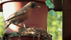 Robin's Nest 512 - Fecal Sac Stock Footage