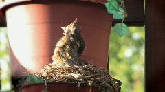 Robin's Nest 510 - stock footage
